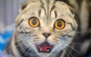 Во сне убил кошку: к чему это Пытаться убить кошку во сне: что это значит