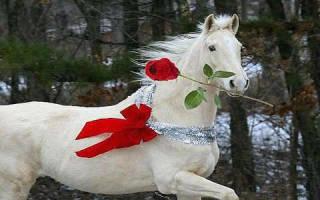 Снится белая лошадь к чему это