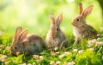 Сонник толкование снов к чему снится кролик