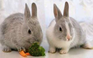 К чему снятся кролики: женщине, мужчине, живые, мертвые, декоративные – сонник