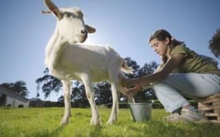 К чему снится коза мужчине и женщине по соннику: живая и мертвая, кормить или доить козу во сне