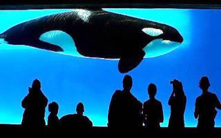 Если снится кит во сне