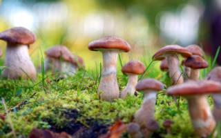 Сон искать грибы в лесу