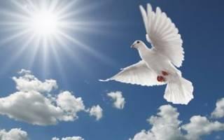 Сонник слышать как голуби хлопают крыльями