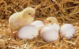 Приворот с помощи яиц