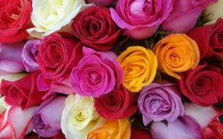 Что означает цвет роз при дарении, к чему дарят зеленые, оранжевые, бордовые цветы
