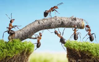 Что означает видеть во сне много муравьев