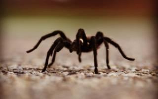 Сонник пауки во сне много видеть