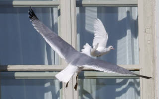 Примета: птица ударилась в окно дома и улетела. К чему птица стучит клювом в окно дома: примета