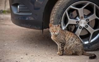 Случайно сбил кошку примета