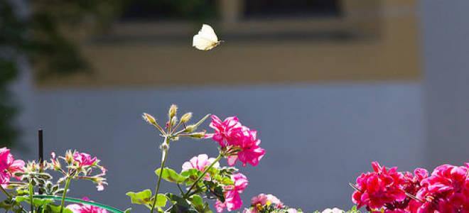 К чему снятся бабочки женщинам