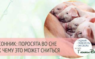 К чему снятся маленькие свиньи(поросята): толкование по соннику