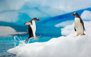Сонник пингвин во сне