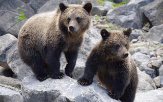 К чему снится медведь — толкование по сонникам