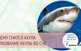К чему снится акула в воде женщине сонник
