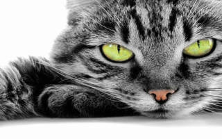 Во сне играть с черной кошкой