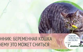 Котята сонник для женщины беременной