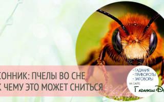 Сонник много пчел в доме