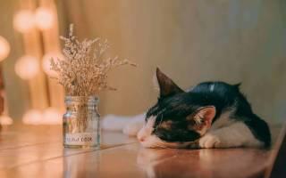 Медитация перед сном полное расслабление и очищение