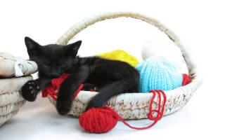 Во сне продавать котят