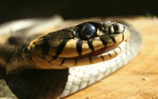 Толкование сна змея кусает