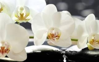 Почему нельзя держать дома орхидеи – народные приметы и мнение ботаников