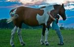 К чему снятся лошади женщине Подробное толкование сна онлайн