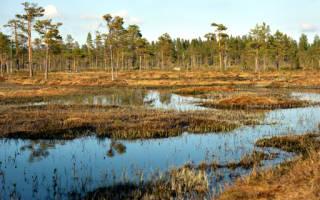 К чему снится болото К чему снится упасть в болото
