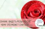 Оранжевая роза сонник