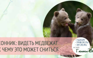 К чему снится бурый медвежонок мужчине