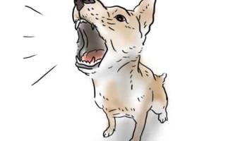 Сонник бояться собачьего лая