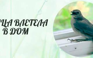 К чему залетает птичка в дом приметы