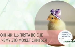 К чему снятся цыплята — снятся цыплята маленькие много сонник