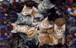 К чему снятся сношающиеся коты