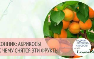 К чему снятся абрикосы: спелые и гнилые, на дереве и на земле, толкования по разным сонникам