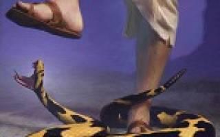 Сновидения об укусах змей: маленькая змея, укусила гадюка, в руку или ногу