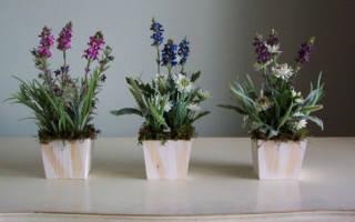 Вьюн цветок домашний приметы