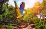 К чему снится 😴 Попугай во сне — по 90 сонникам! Если видишь во сне Попугай что значит