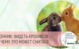 Кчему снится кролик женщине имужчине. Приснился кролик: белый, черный, серый